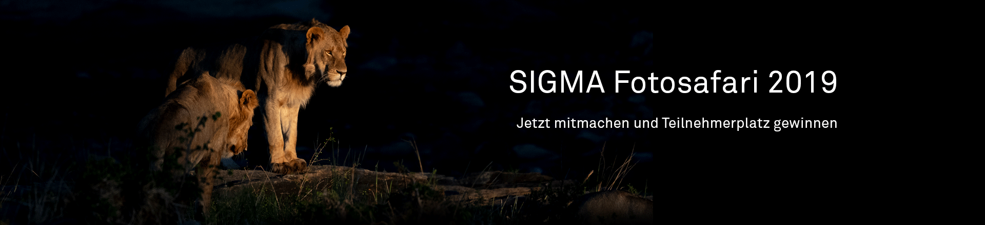 SIGMA Safari